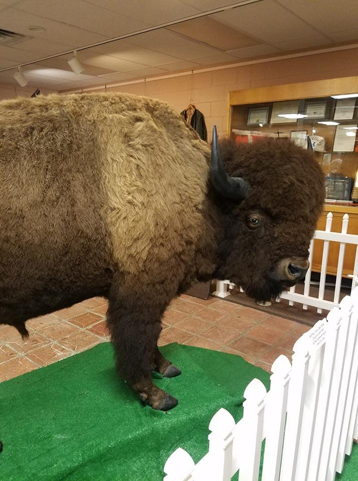 buffalo full